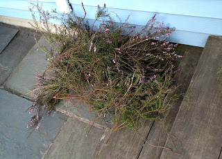 heather cut from overgrowth