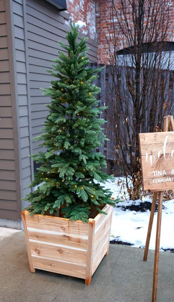 kennedy fir tree outdoors