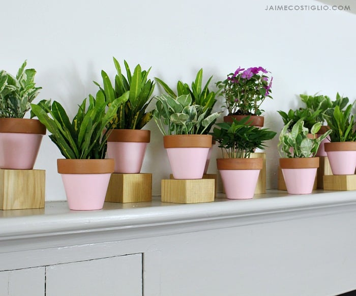 plants on wood stands