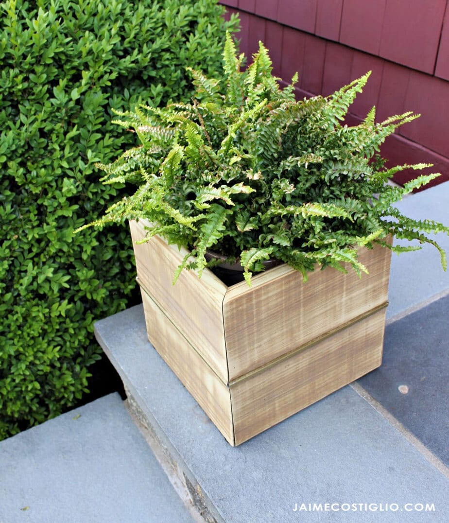 fern inside wood planter