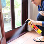 Proactive Pest Control – Keeping Bugs Away